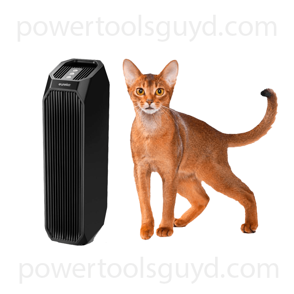 Air purifier in the removal of allergies.