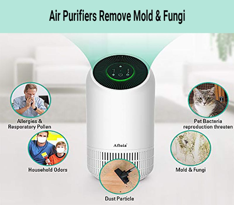 mold air purifier